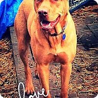 Adopt A Pet :: Jax - Billerica, MA