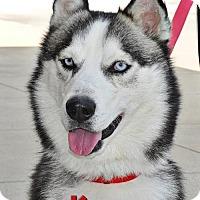Adopt A Pet :: Kage - Carrollton, TX