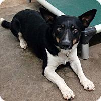 Adopt A Pet :: AJ - Sylacauga, AL