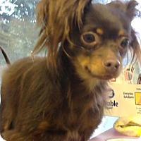 Adopt A Pet :: Princess - ADOPTED - Decatur, GA