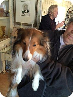 Sheltie, Shetland Sheepdog Mix Dog for adoption in Crump, Tennessee - n/a
