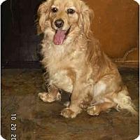 Adopt A Pet :: Joe - Graham, WA