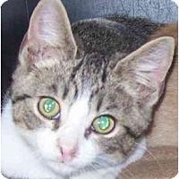 Adopt A Pet :: Benny - Annapolis, MD