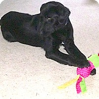 Adopt A Pet :: Elvis - Somers, CT