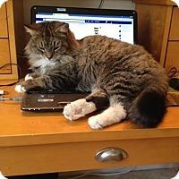 Adopt A Pet :: Jenny ( Quirky Lapsitter) - Arlington, VA