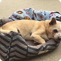 Adopt A Pet :: BOBBY - Los Angeles, CA