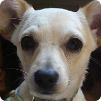 Adopt A Pet :: Mogli - Lakeville, MN
