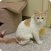 Adopt A Pet :: Julius - Phoenix, AZ