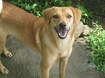 Pekingese Mix Dog for adoption in Albany, New York - Ellen