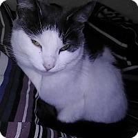Adopt A Pet :: Pygmy - Flushing, MI