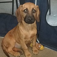 Adopt A Pet :: Sydney - Shelter Island, NY