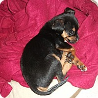Adopt A Pet :: Gracie - Georgetown, KY