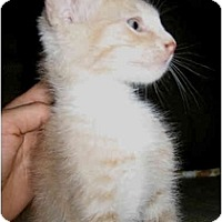 Adopt A Pet :: Tucker - Davis, CA