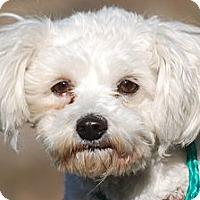 Adopt A Pet :: Juliet - Providence, RI