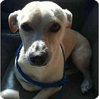 Adopt A Pet :: Barney - Arlington, TX