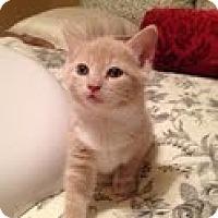 Adopt A Pet :: Buddy - Waxhaw, NC