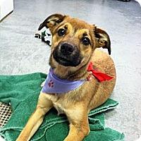 Adopt A Pet :: Tania - Fort Riley, KS