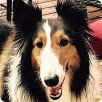 Adopt A Pet :: Rusty - Abingdon, MD