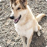 Adopt A Pet :: Jacob - Ashland, OR