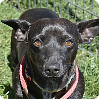 Adopt A Pet :: Oreo - Meridian, ID
