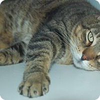 Adopt A Pet :: B.B. - Bradenton, FL