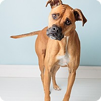 Adopt A Pet :: Duke - Hendersonville, NC