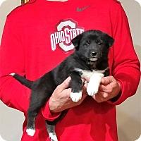 Adopt A Pet :: Molly - South Euclid, OH