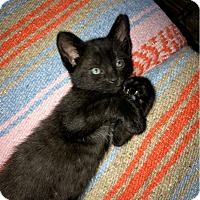 Adopt A Pet :: Ebert - Yorba Linda, CA