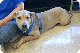 Shepherd (Unknown Type) Mix Dog for adoption in Minneola, Florida - Phoebe