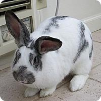 Adopt A Pet :: Poppy - Little Rock, AR