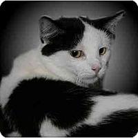 Adopt A Pet :: Taryn - Montgomery, IL