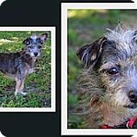 Adopt A Pet :: Zoe - Brooksville, FL