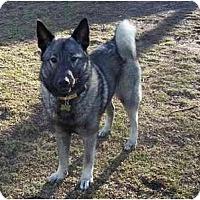 Adopt A Pet :: Spike - Belleville, MI