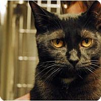 Adopt A Pet :: Perry - Lunenburg, MA