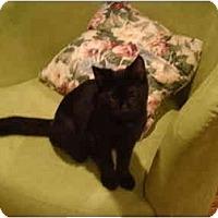 Adopt A Pet :: Booger-PETSMART - Muncie, IN