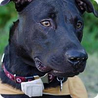 Adopt A Pet :: Bosco - Orlando, FL