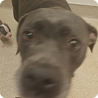 Adopt A Pet :: Mrs. Potts - Scottsdale, AZ
