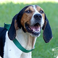 Adopt A Pet :: Ava--RESCUED! - Marlinton, WV