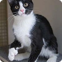 Adopt A Pet :: Loganberry - Merrifield, VA