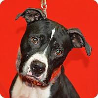 Adopt A Pet :: Bucky - Jackson, MI
