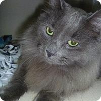 Adopt A Pet :: Nikki - Hamburg, NY