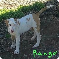Adopt A Pet :: Ranger - Lawrenceburg, TN