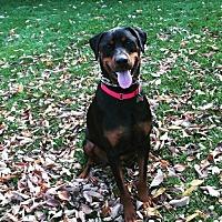 Adopt A Pet :: Bosworth - Catasauqua, PA