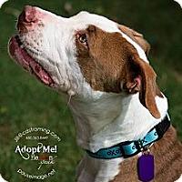 Adopt A Pet :: DIAMOND - Phoenix, AZ