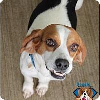 Adopt A Pet :: Tally - Yardley, PA