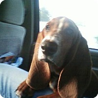 Adopt A Pet :: Copper - Columbia, SC