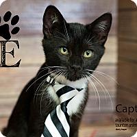 Adopt A Pet :: Captain & Tennille - Brockton, MA