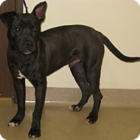 Adopt A Pet :: Ford - Gary, IN