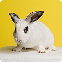 Adopt A Pet :: Baron Cotton of Bunningham - Ogden, UT