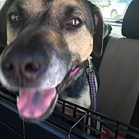 Adopt A Pet :: Frida - Houston, TX